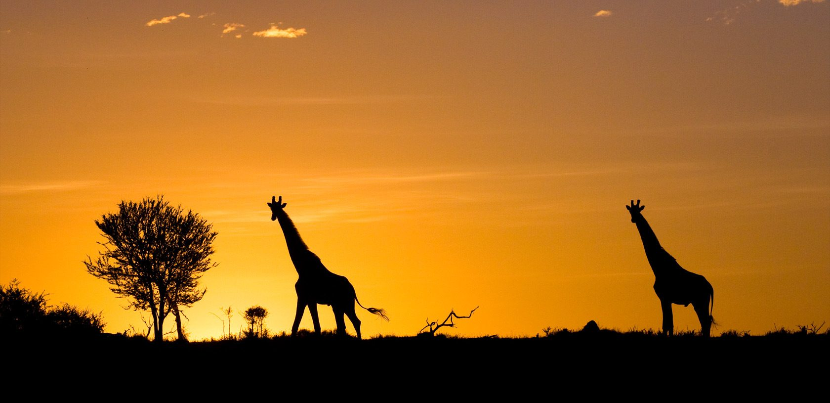 Serengeti Tanzania giraffe at sunset