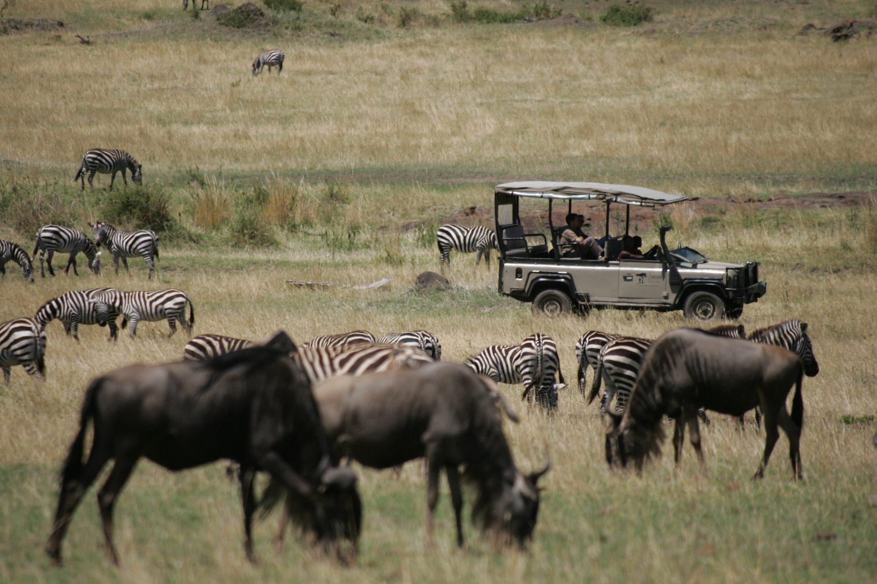 Wildebeest and Zebra in the Maasai Mara