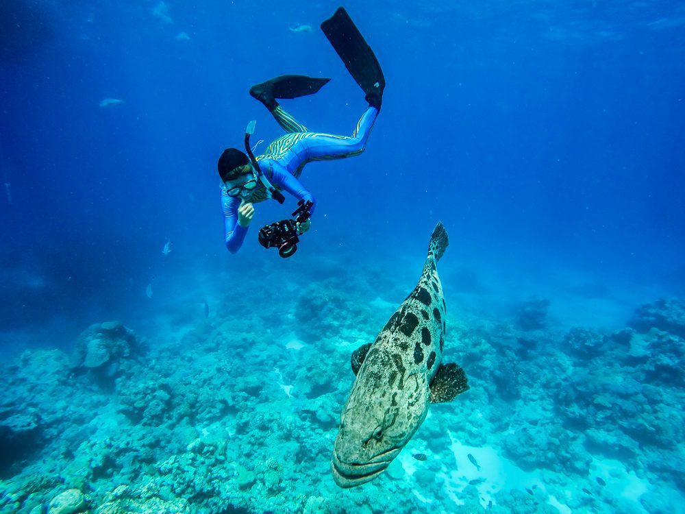 Woman scuba diving in the Great Barrier Reef taking photos of a huge fish.