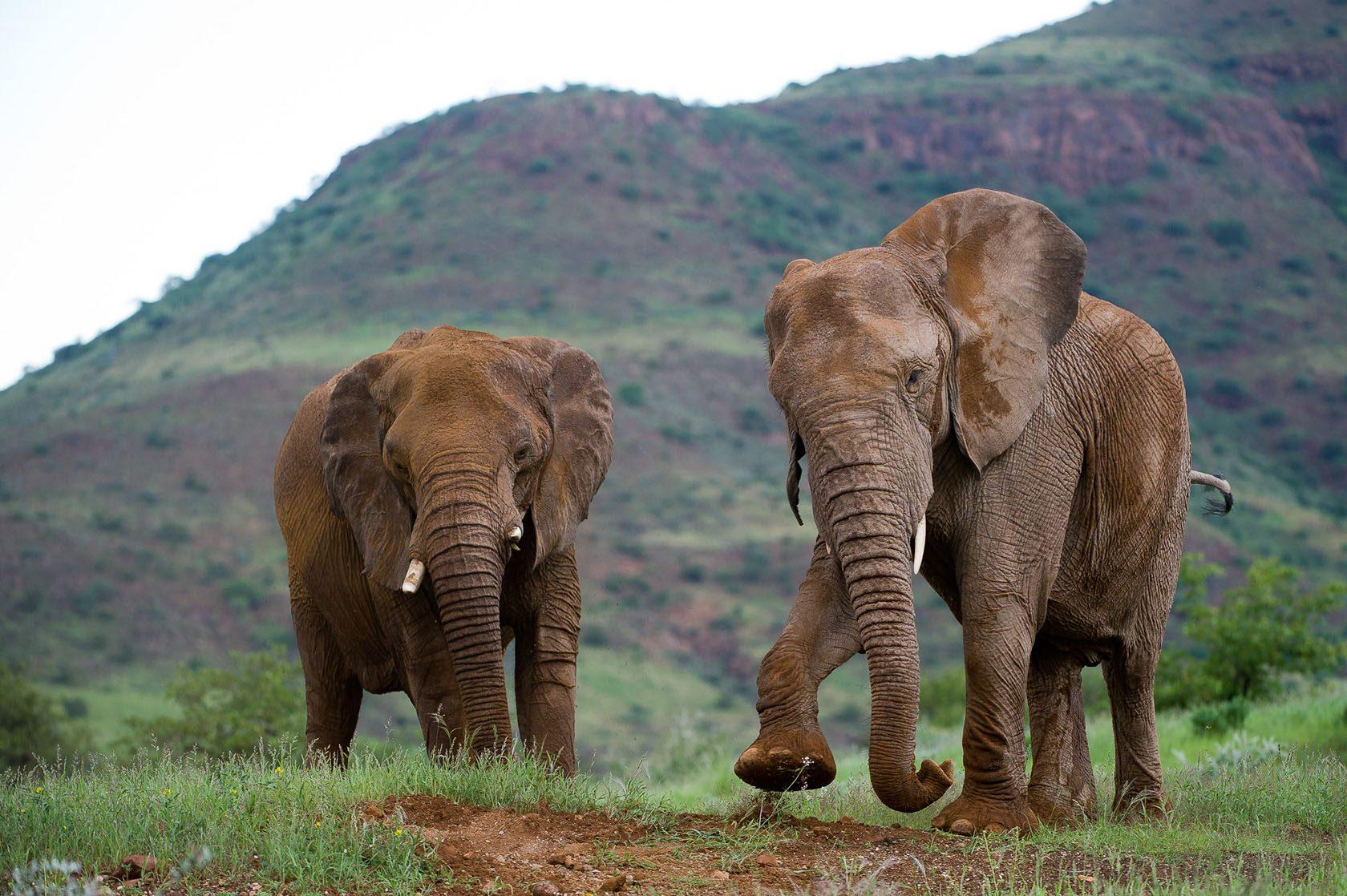 Elephants in Damaraland
