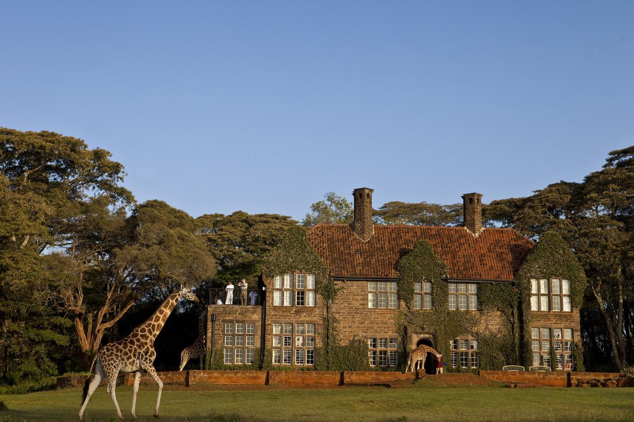 exterior of a stately manor covered in ivy with a giraffe walking past on our best East Africa safari