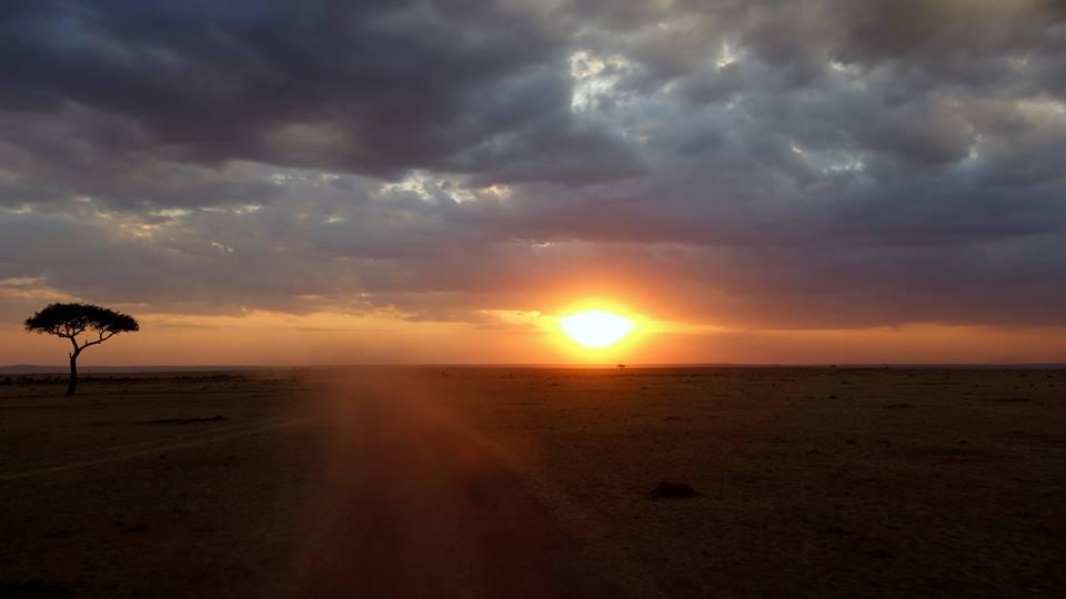 mara sunset with acacia tree on biplane safari