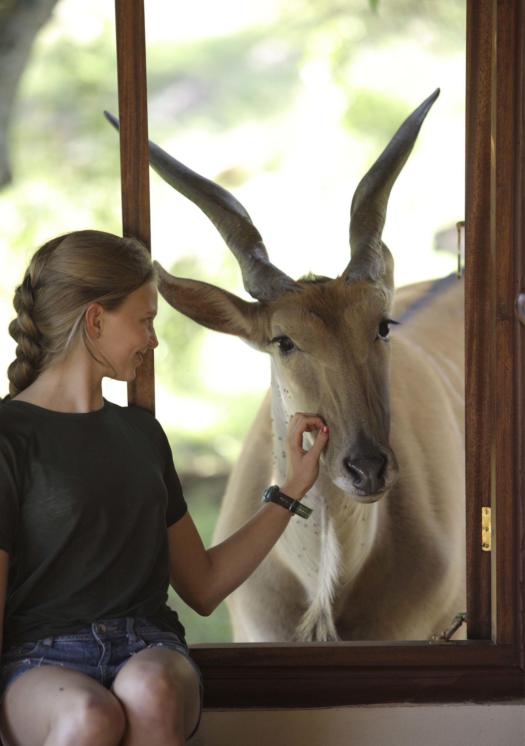 Young girl petting an Eland through a window