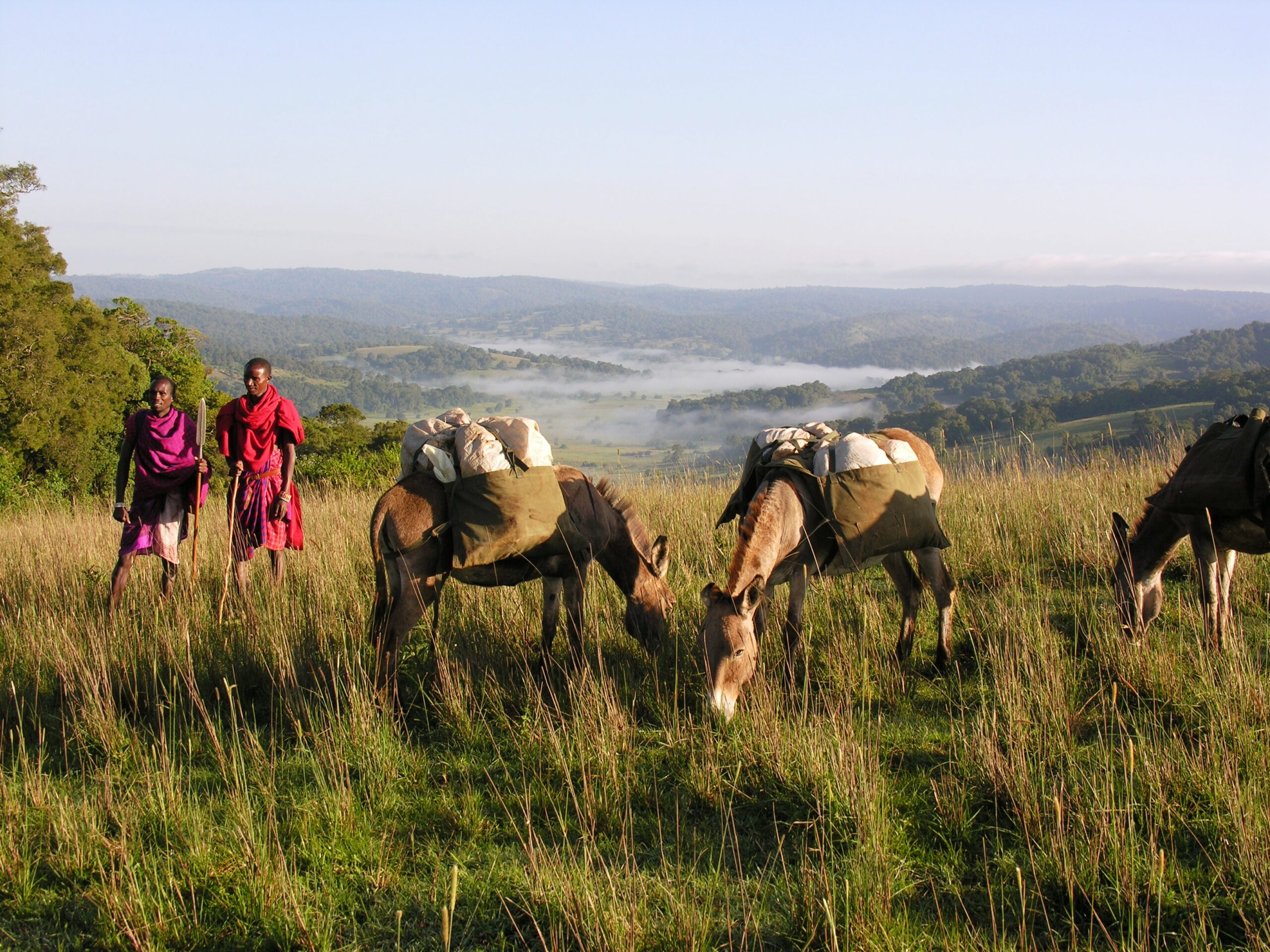 Donkeys carrying gear through Lolita Hills with two Maasai on a walking safari