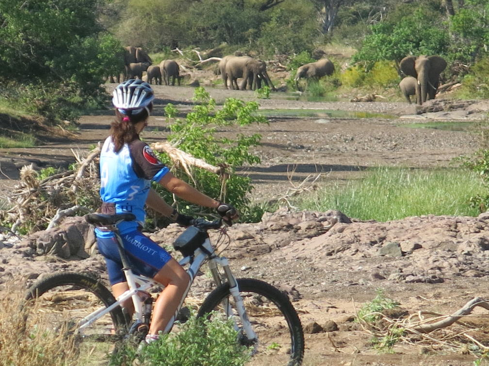 Woman stops on her mountain bike ride through Mashatu Game Reserve to observe a few elephants grazing