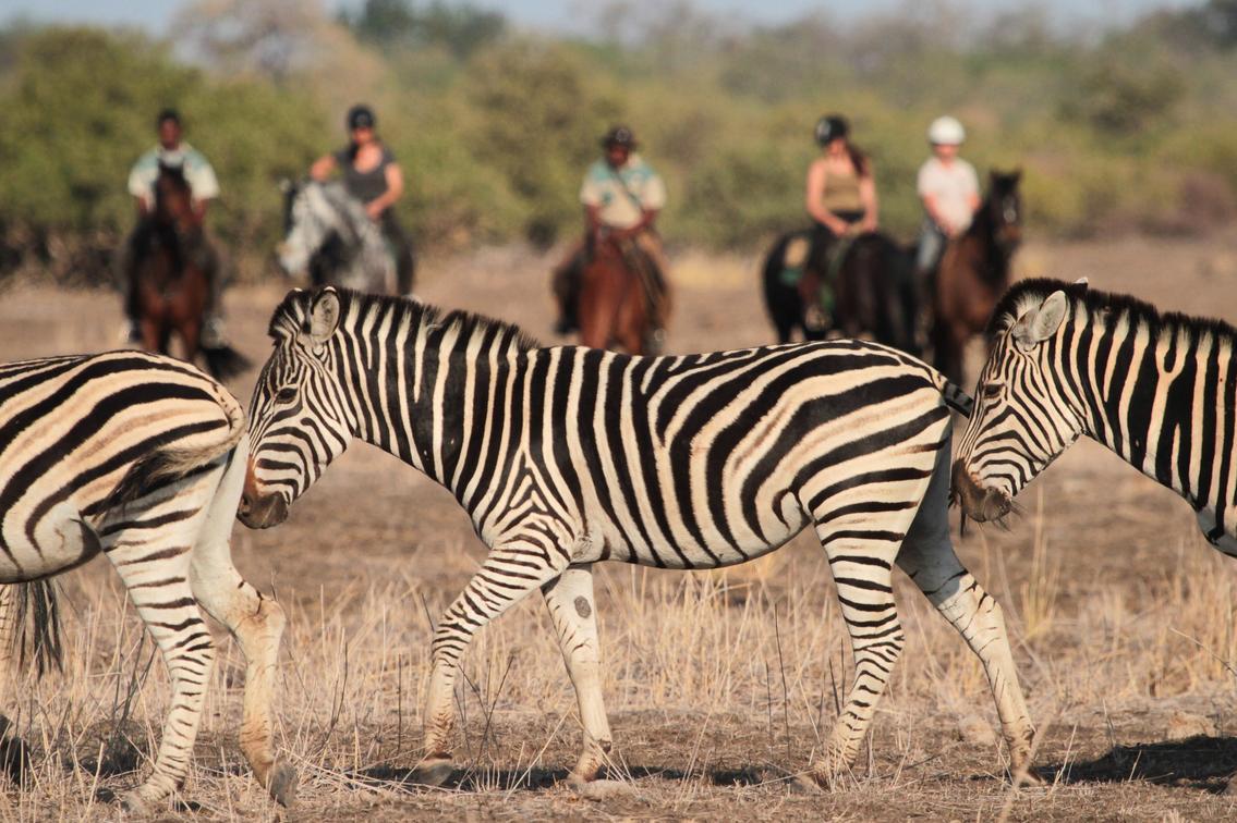 Horseback riders stop to watch some zebras walking in Mashatu Game Reserve