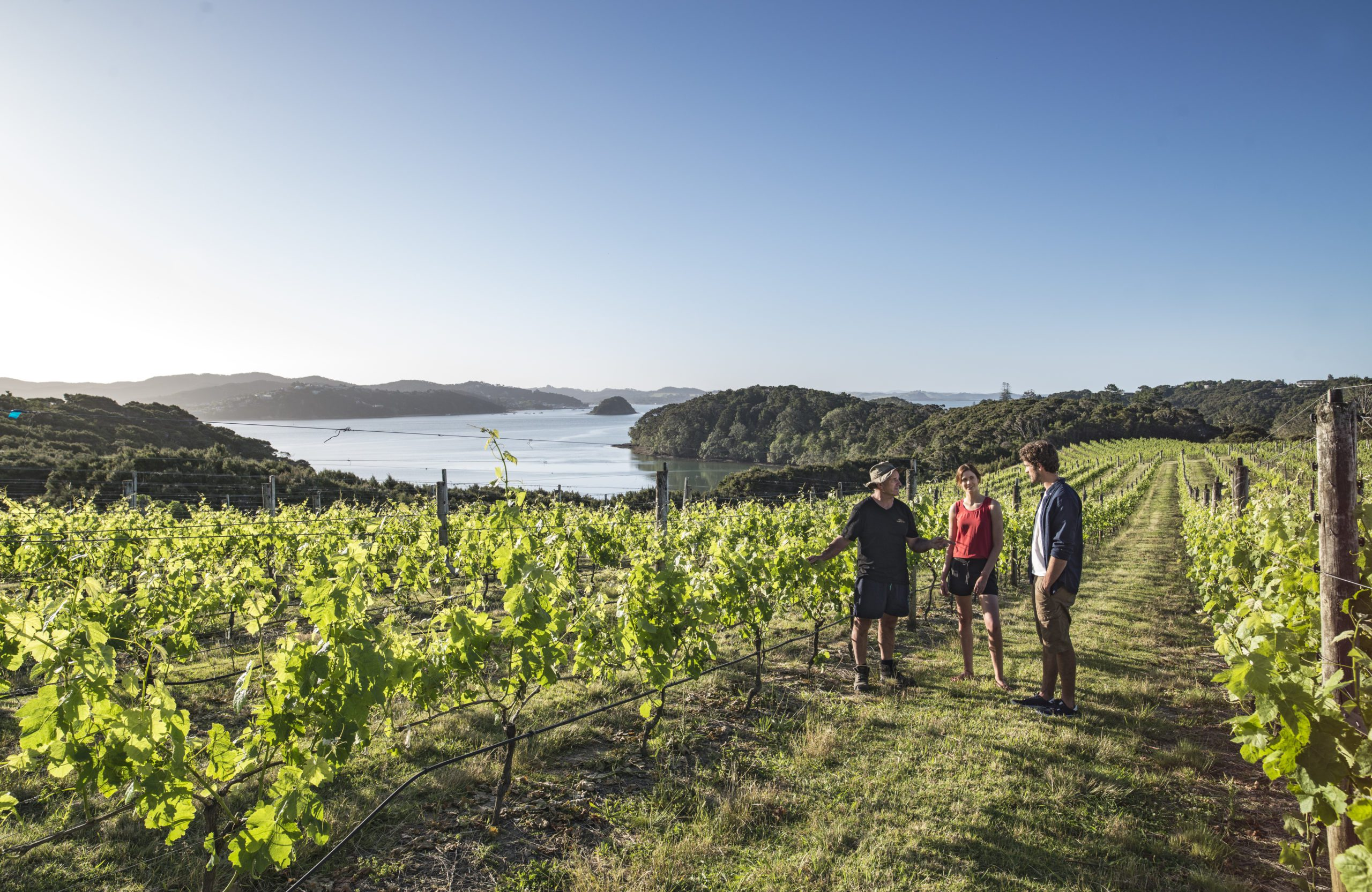 Walking through a vineyard in the Bay of Islands with the ocean in the background.
