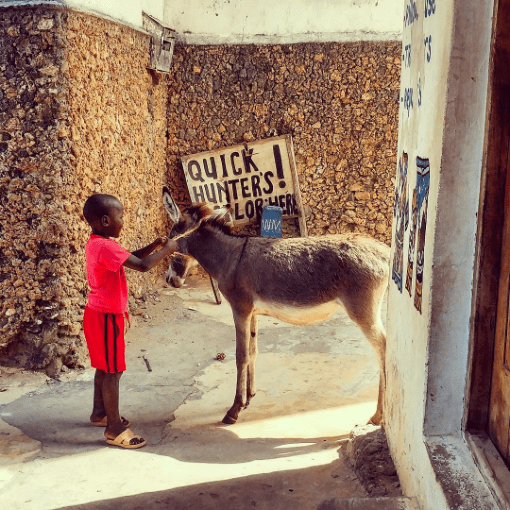 young boy with a donkey in Lamu