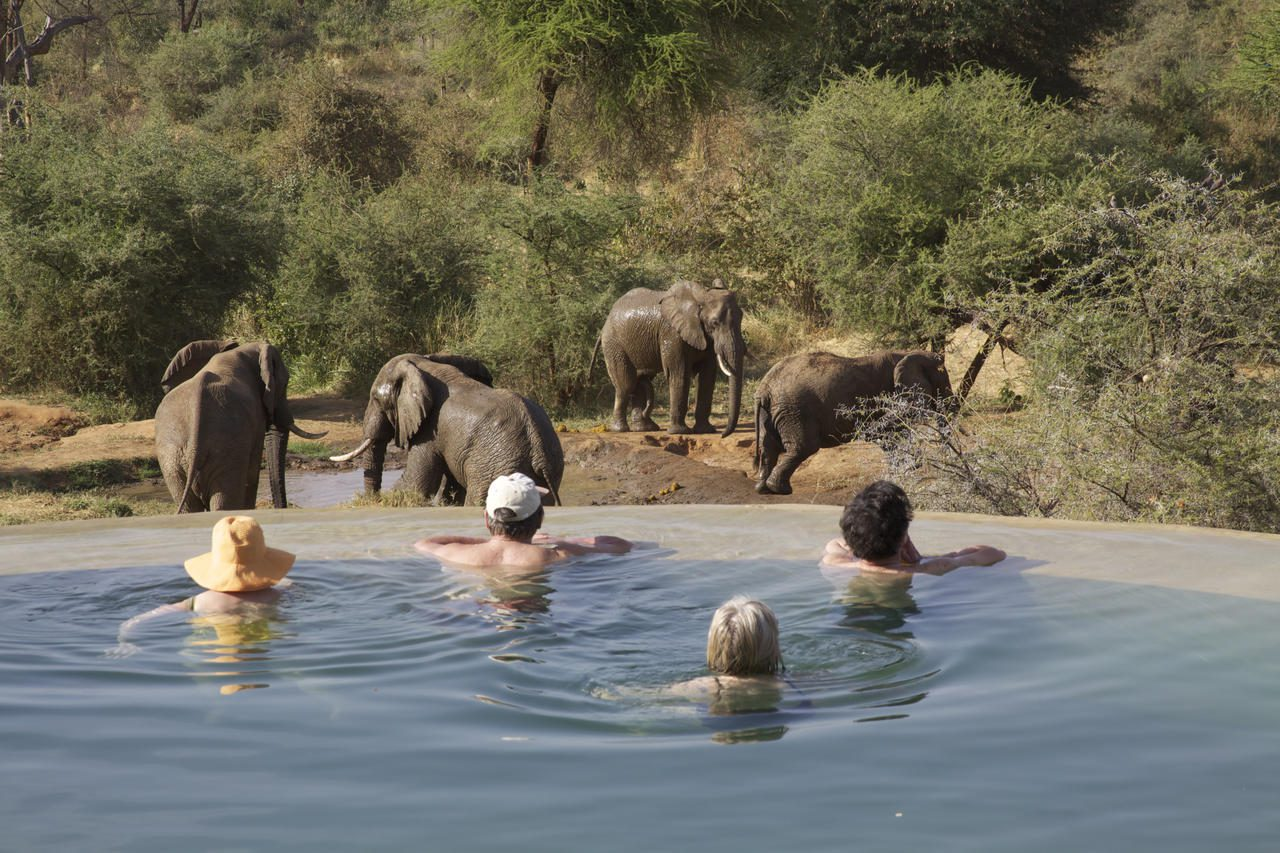 a family enjoys the swimming pool while looking at elephants in the bush