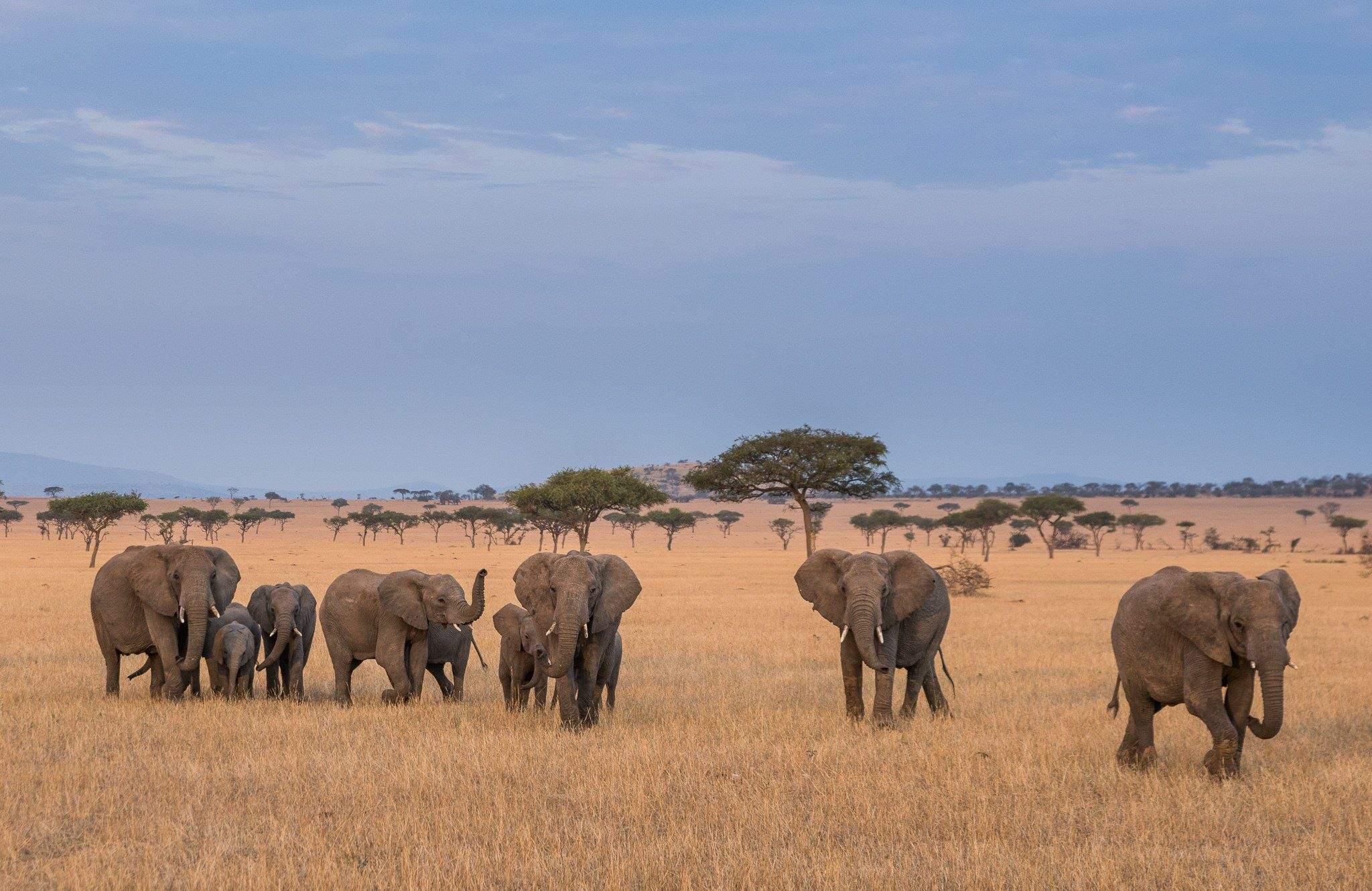 a herd of 10 elephants on the plains of the Serengeti on this northern Tanzania safari