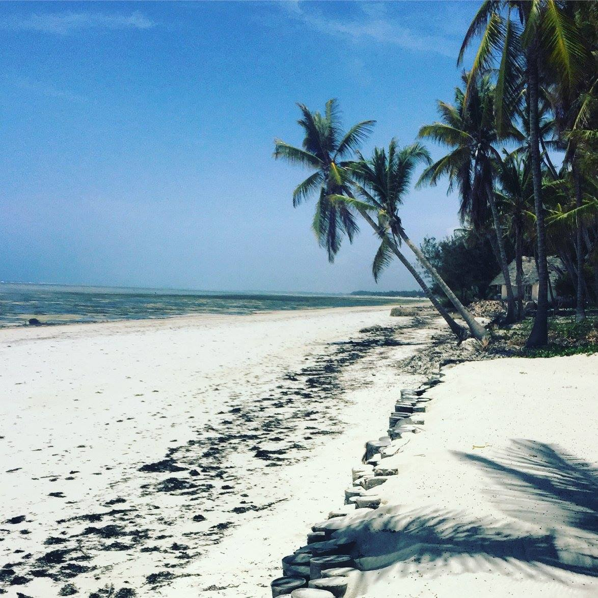 stretch of white sand dotted with palm trees
