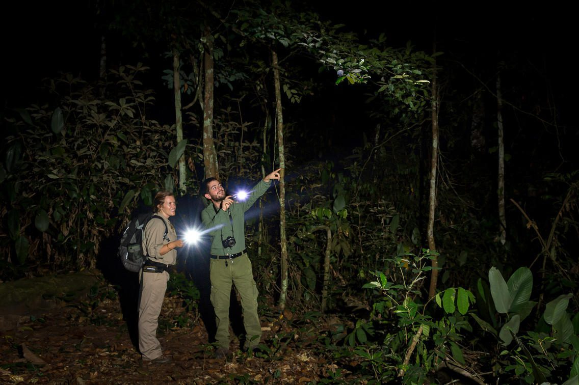 two men at night holding flashlights in the forest while on safari in republic of the congo