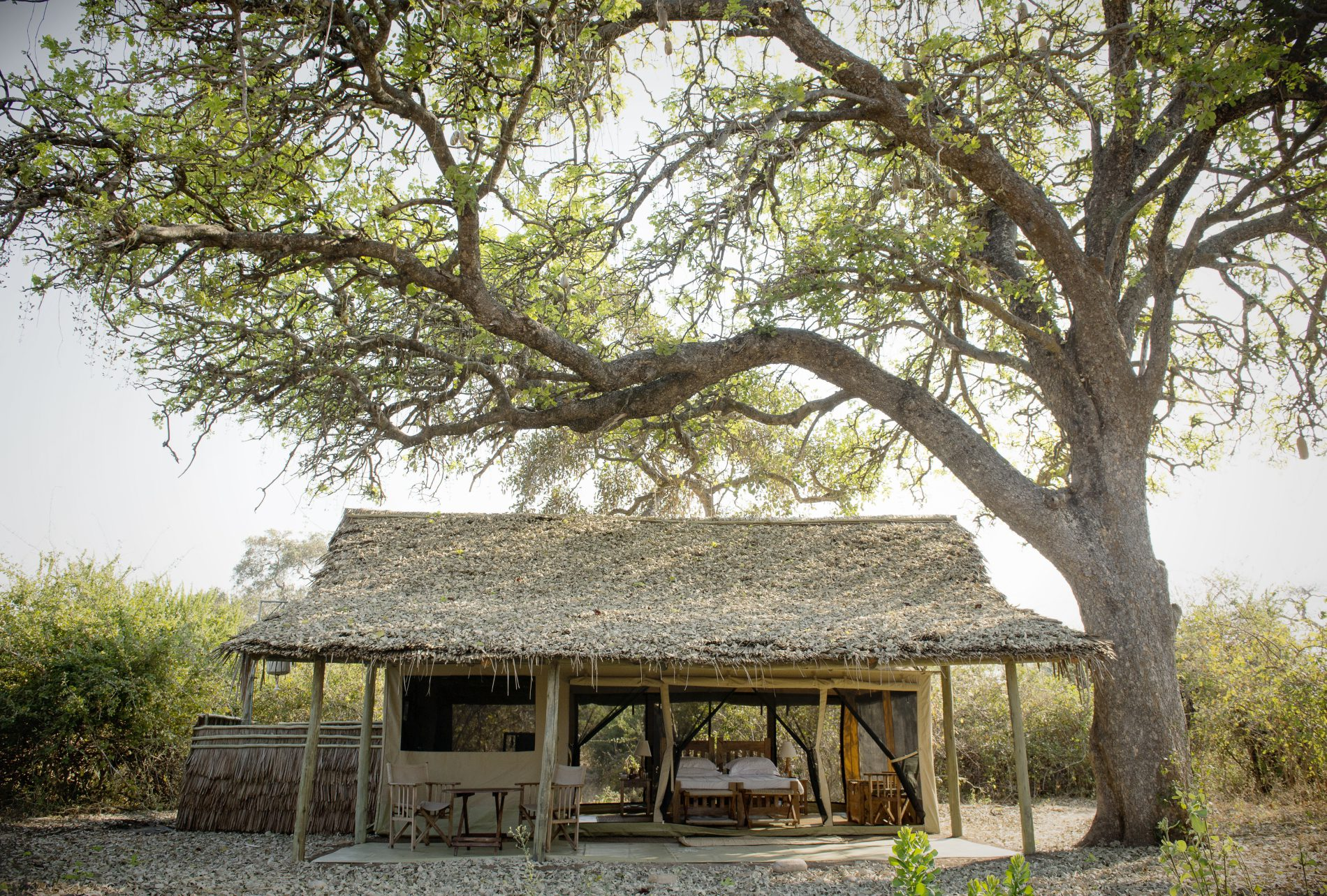 the broad branches of a tree shade a sunny, open-air suite at Kigelia Ruaha featuring a bed, a seating area, and a grass roof