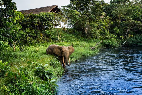 mboko camp forest elephant