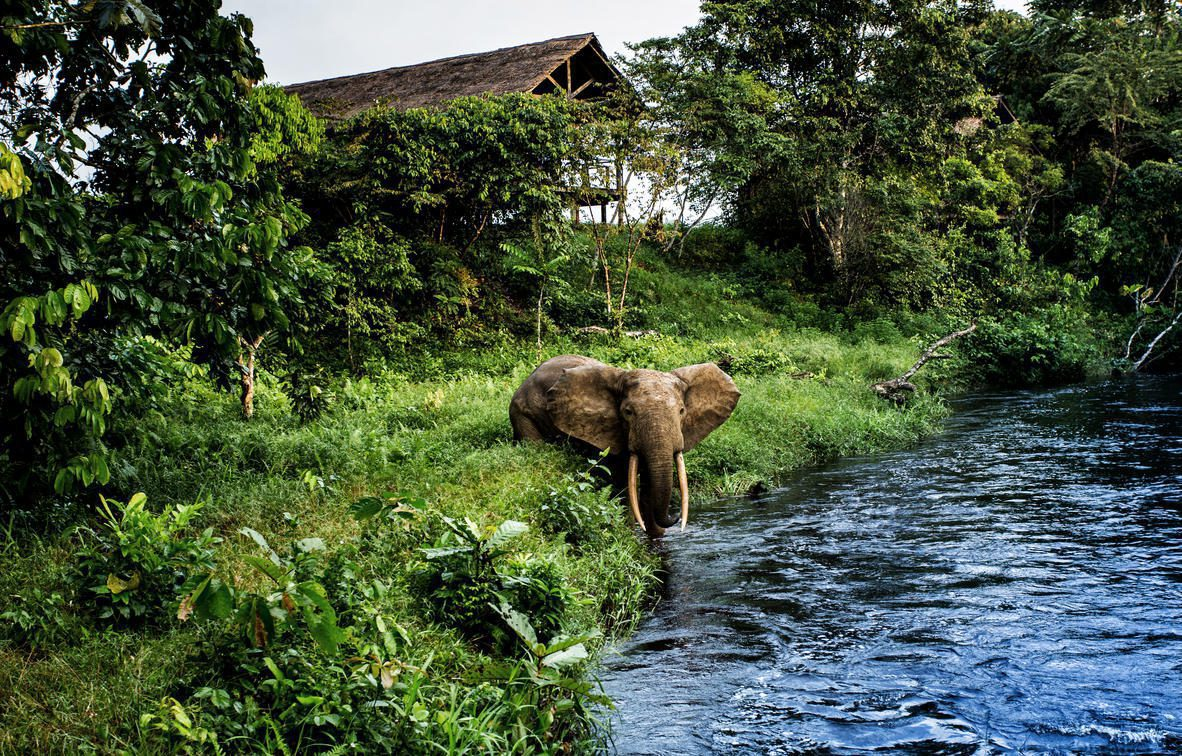 elephant in water with bungalow in background