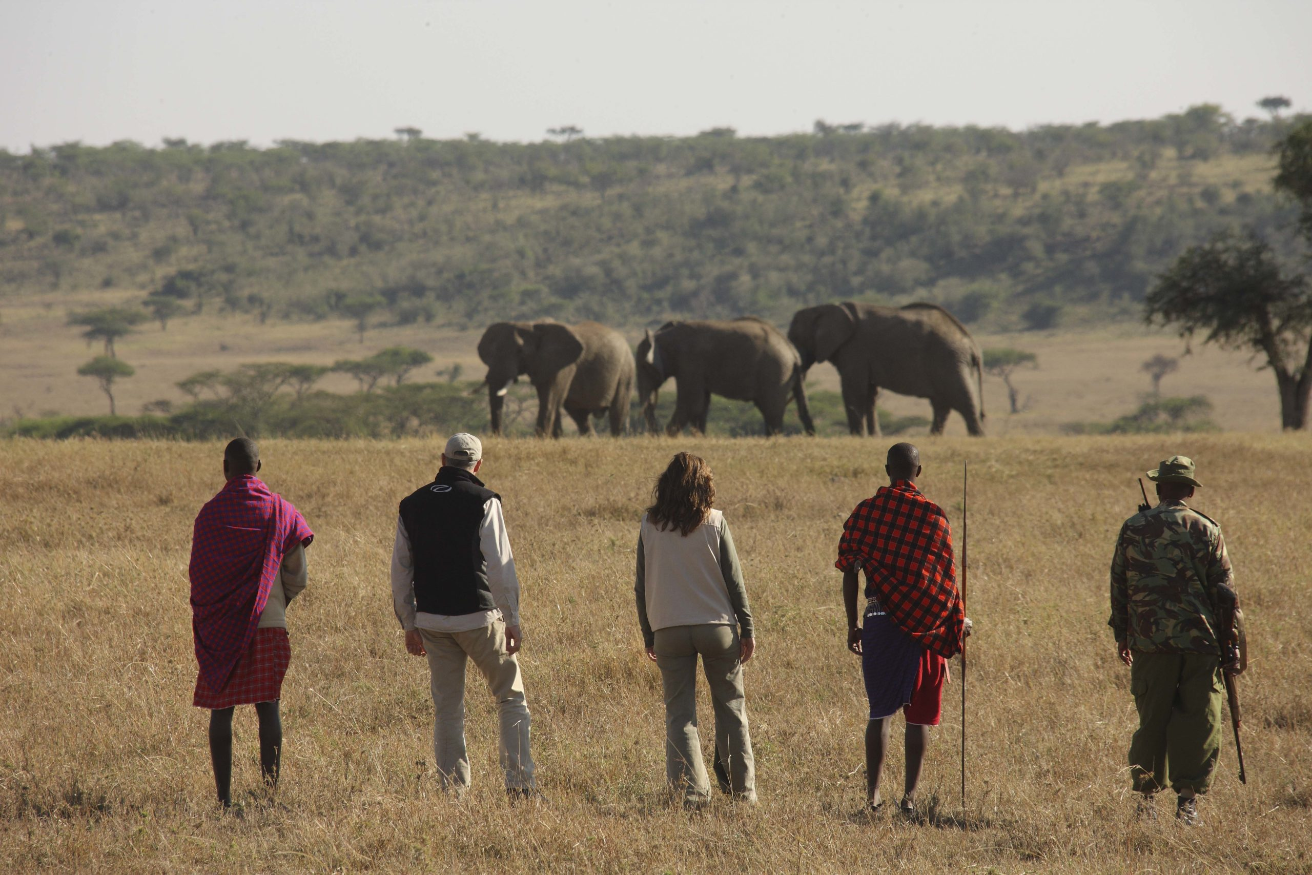 Two guests with two masaai warriors on a bush walk observing a family of elephants