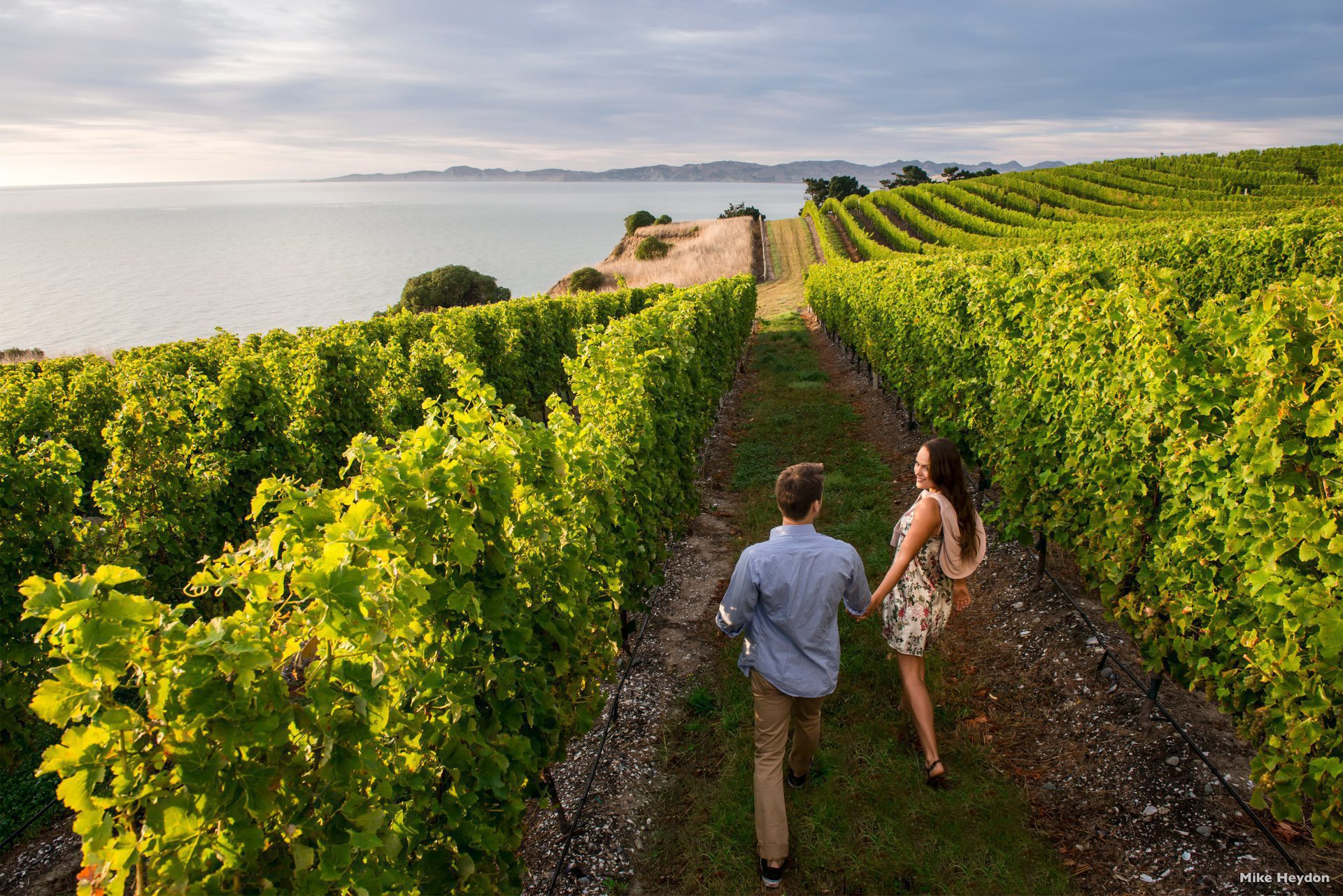Blenheim Marlborough couple exploring vineyard on New Zealand's South Island tour