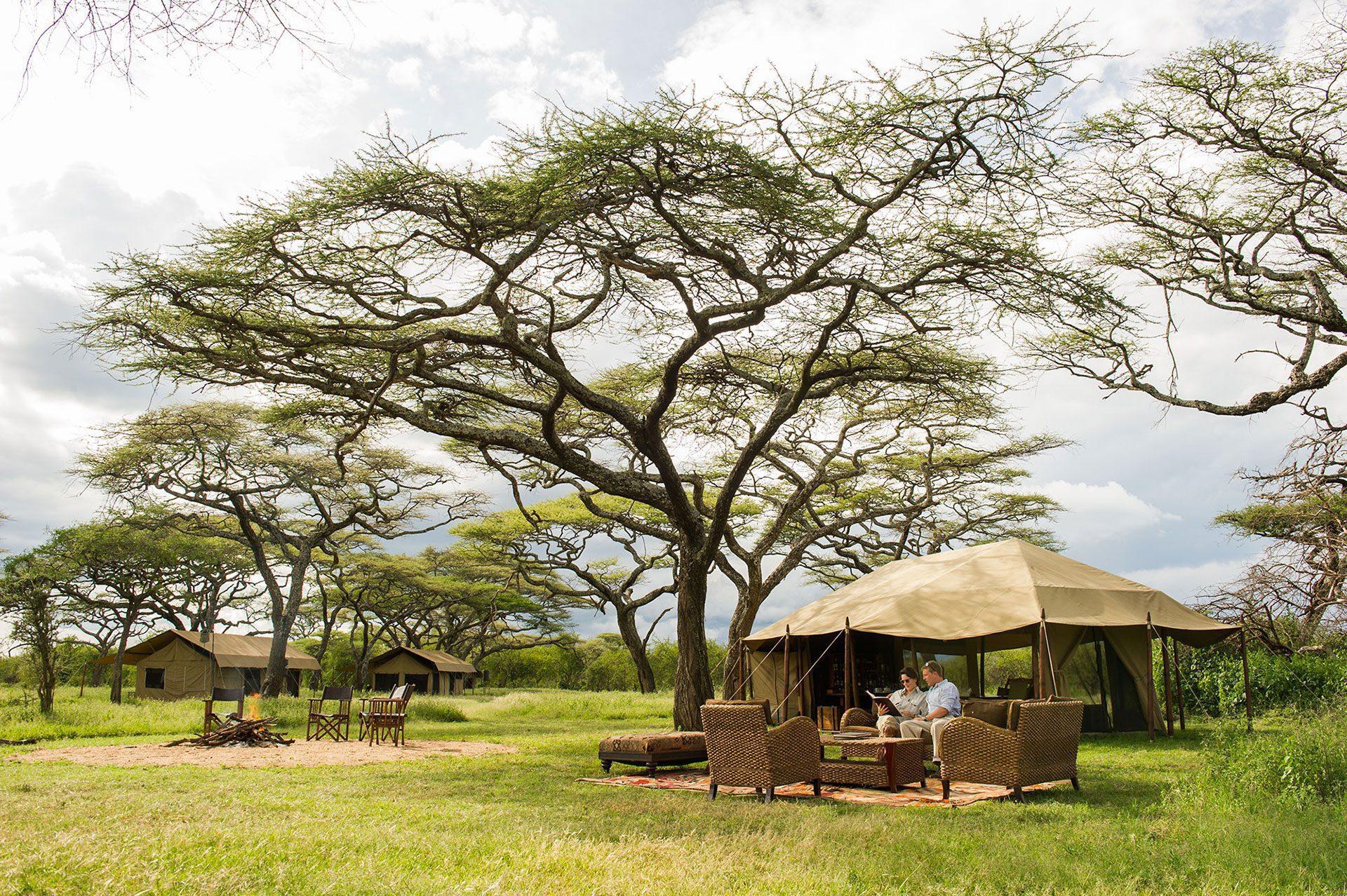 legendary serengeti mobile camp with tree on Africa safari