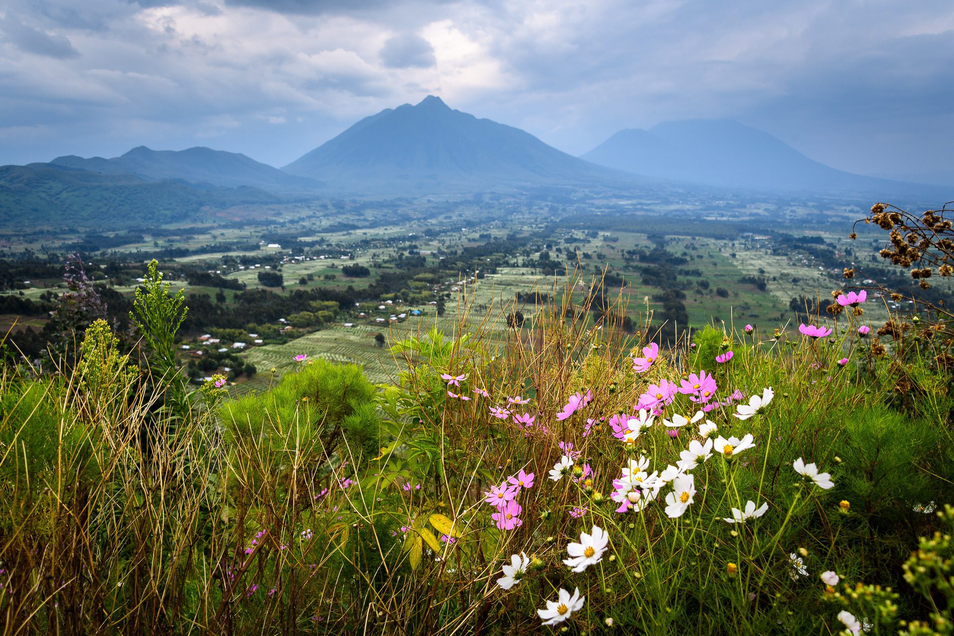 flowers in the foreground of a view of volcanoes national park on best Rwanda safari