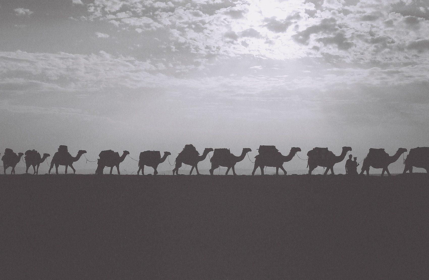 Camels making their way across the land single-file.