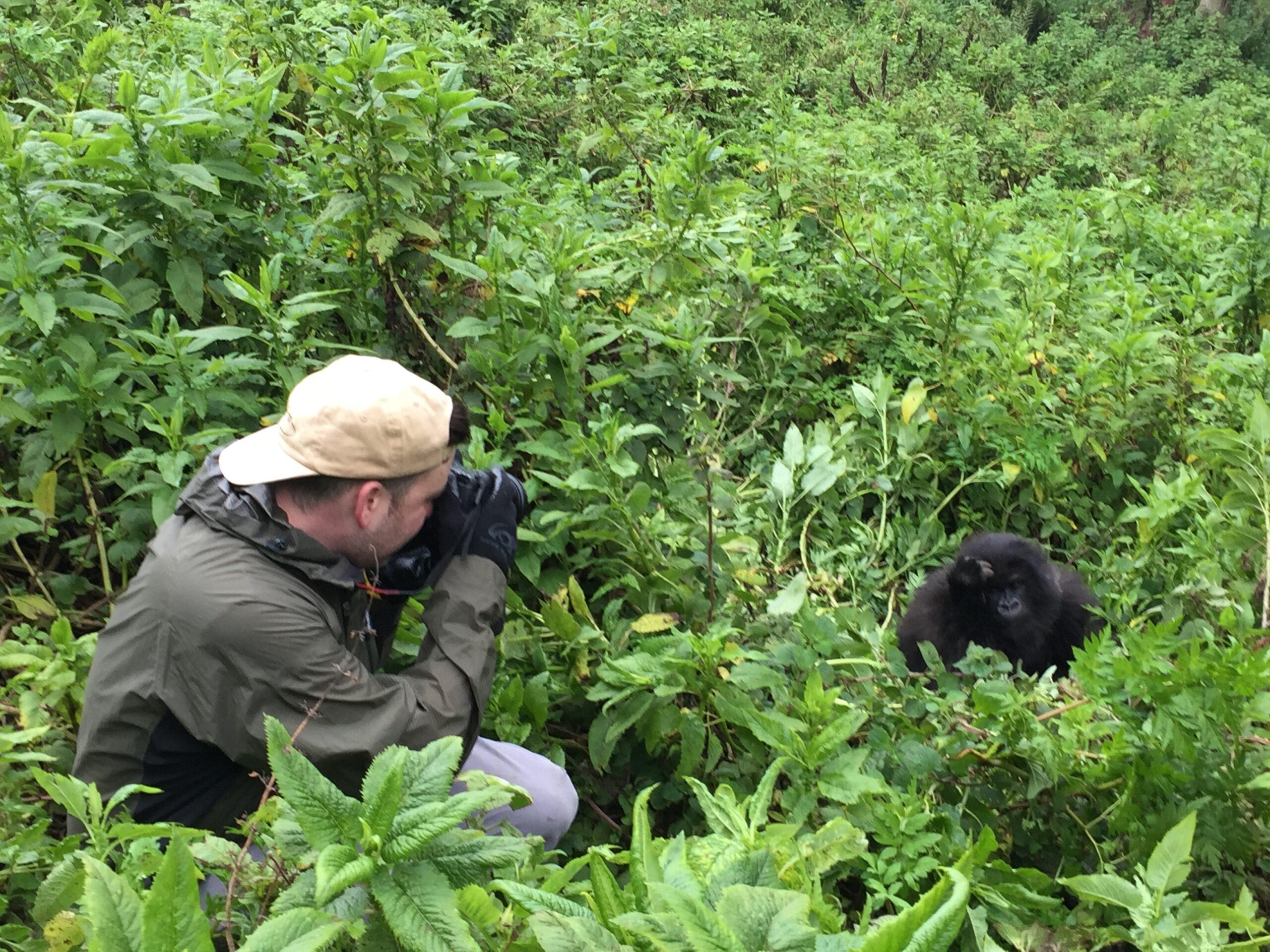 man taking a photo of a gorilla in the bush in Rwanda