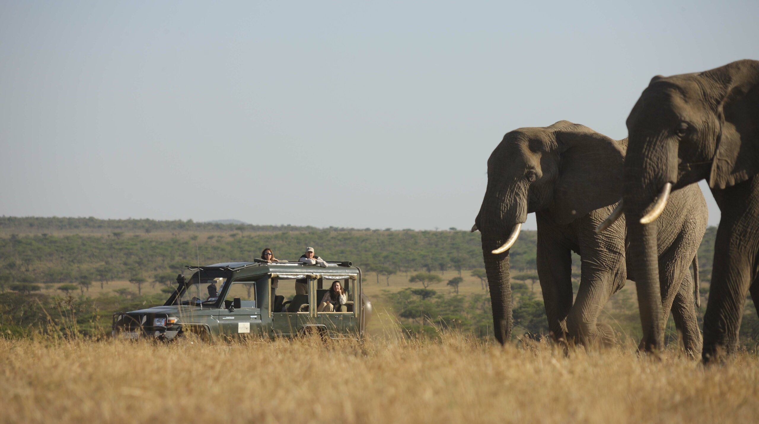 game drive at kicheche valley with people in a safari vehicle admiring a large elephant