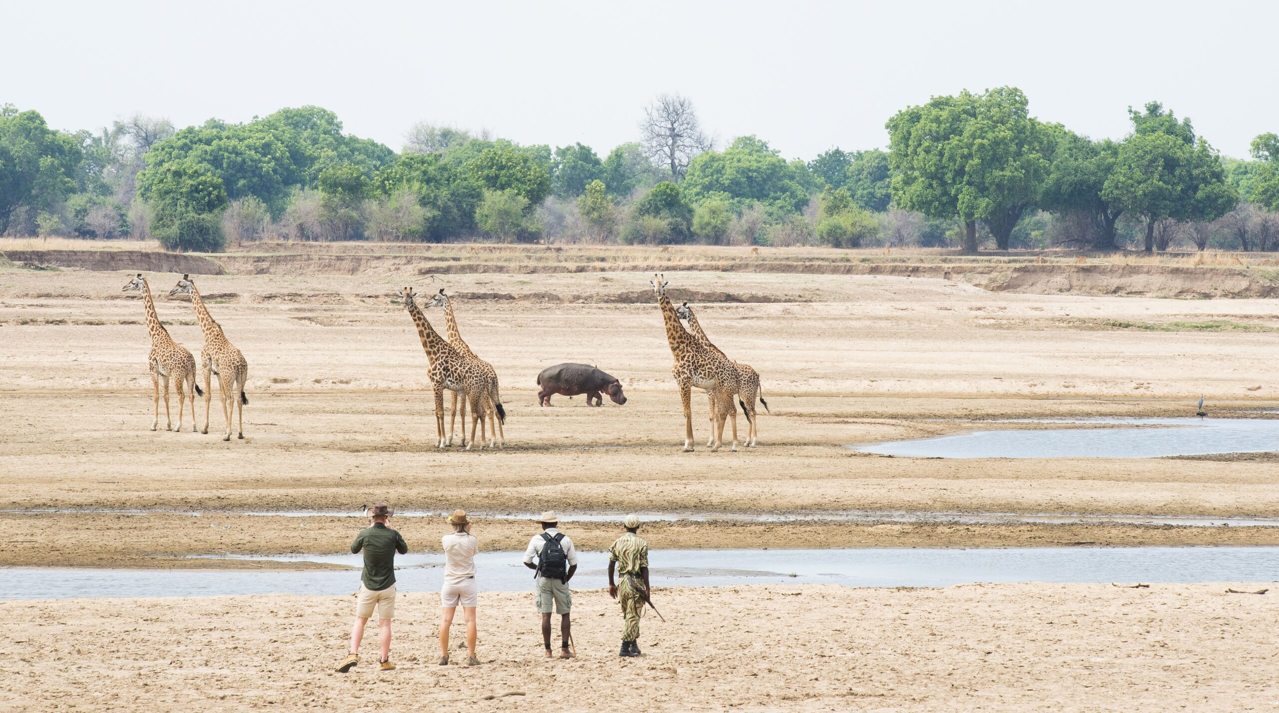 four people on a bush walking in Africa safari in South Luangwa seeing six giraffe across a meandering river