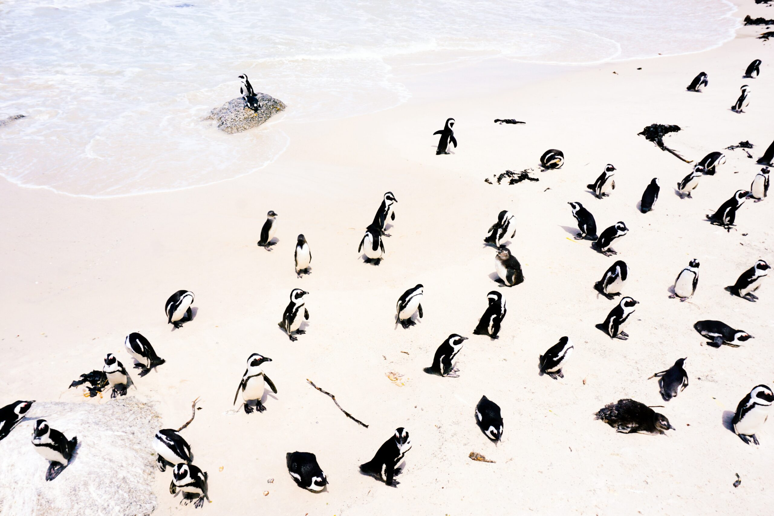 group of penguins on white sand beach on this Cape Town and the Best South Africa Safari