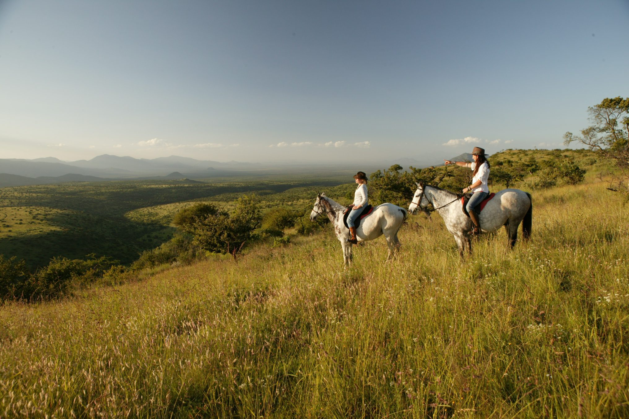 two white horses with riders in Lewa stopped on a hill looking at the valley below.