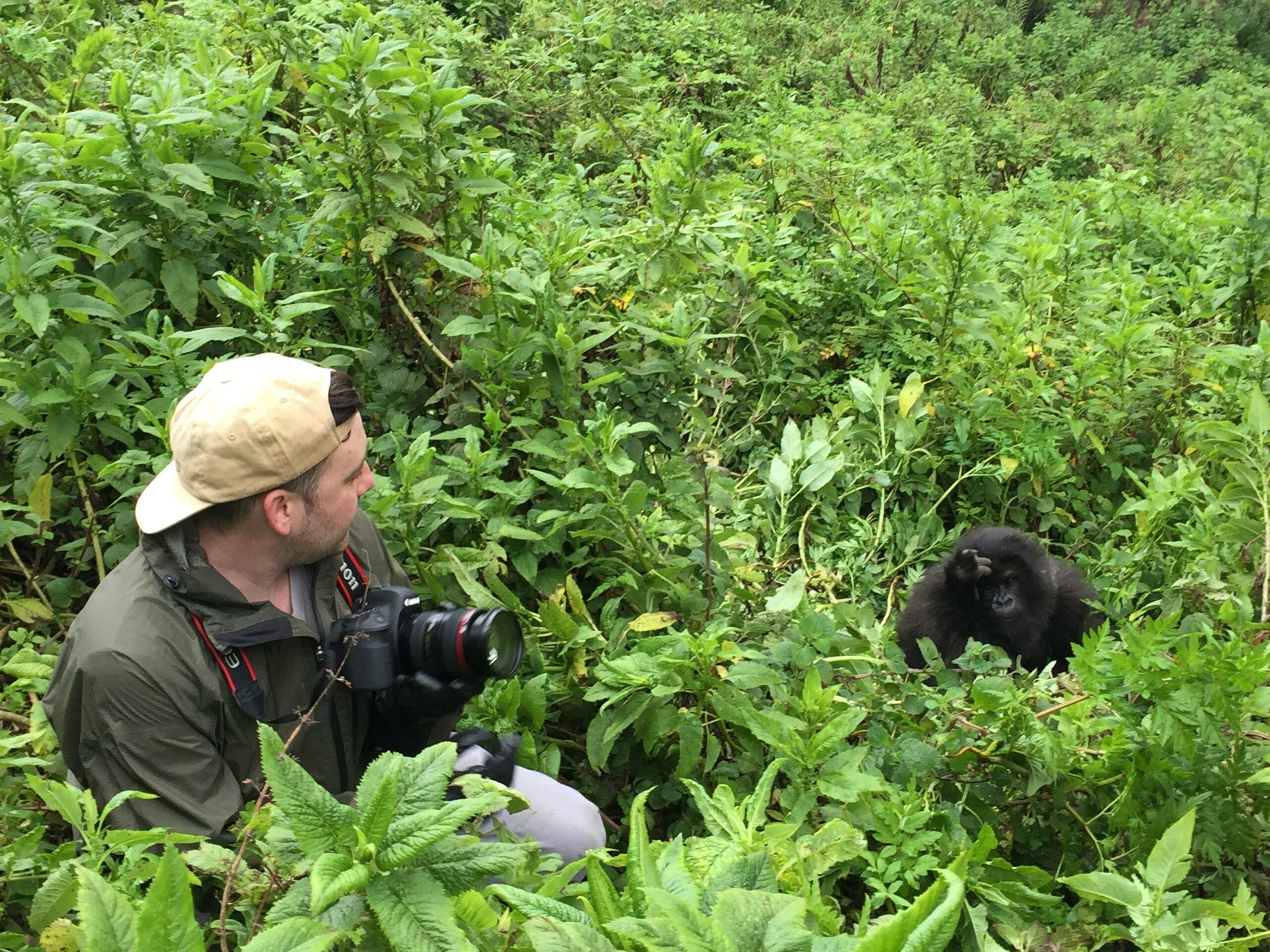 gorilla and man in Rwanda
