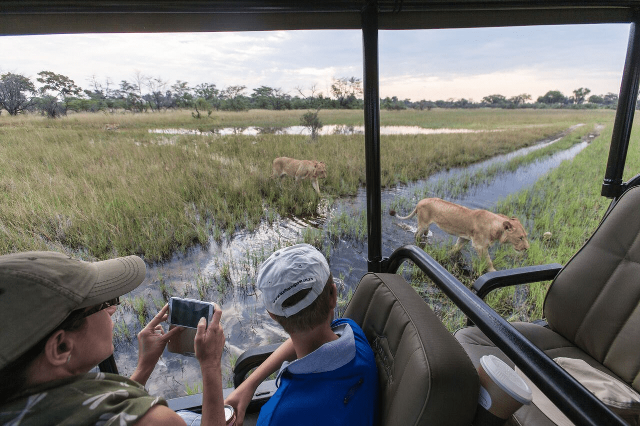 family in safari vehicle watches lions stalk their prey through the marshy Okavango Delta in Botswana