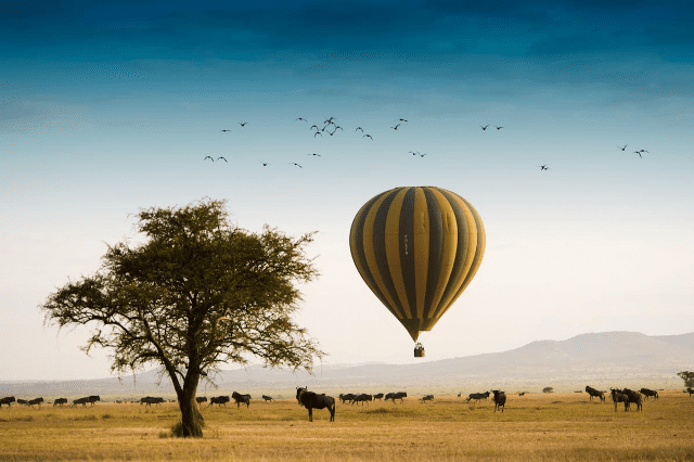 a blue and yellow striped hot air balloon safari rises beside a tree, hovering over the savanna and a herd of wildebeest
