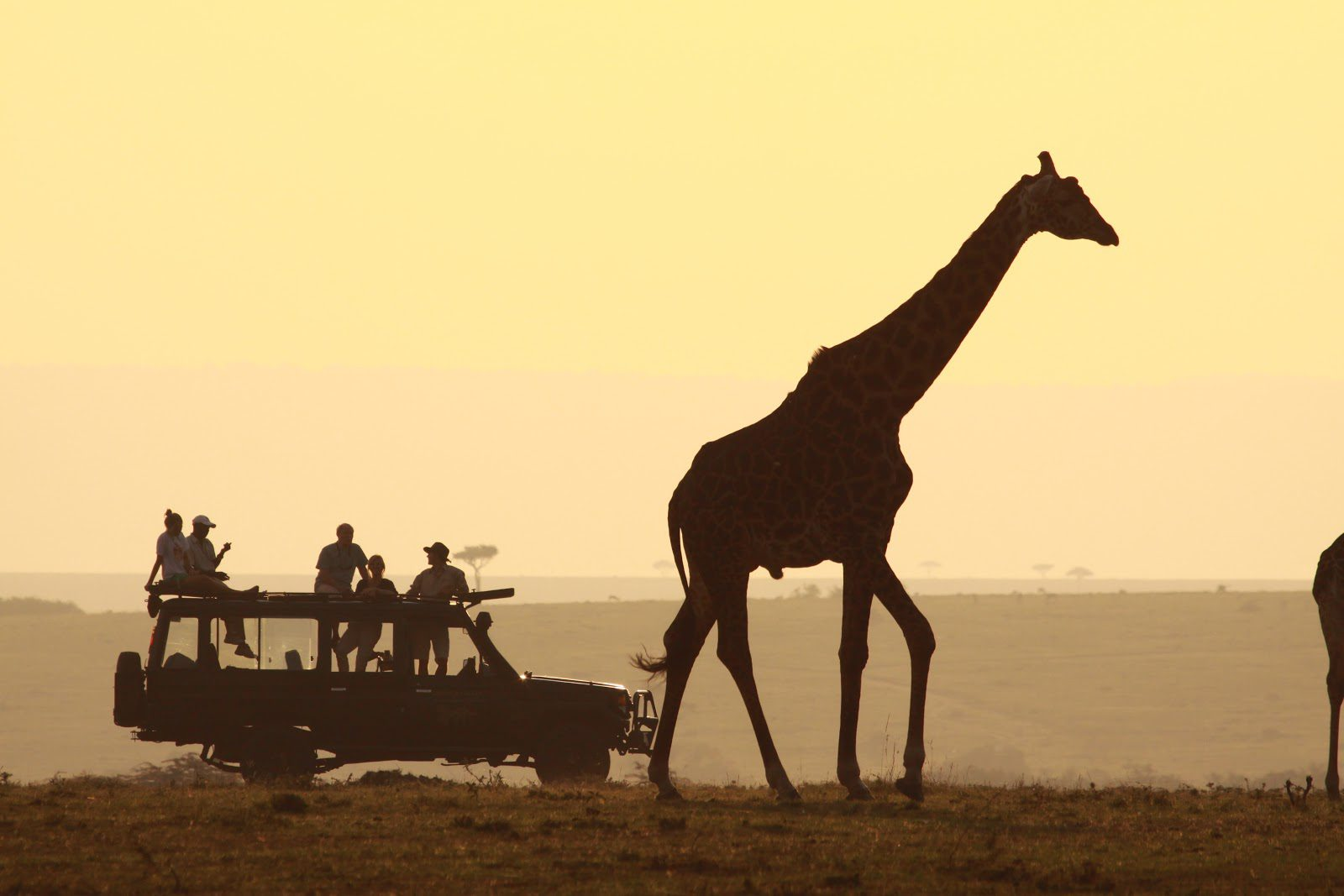 silhouette of a group of game drive vacation goers perched atop a game drive vehicle, parked at the heels of a giraffe