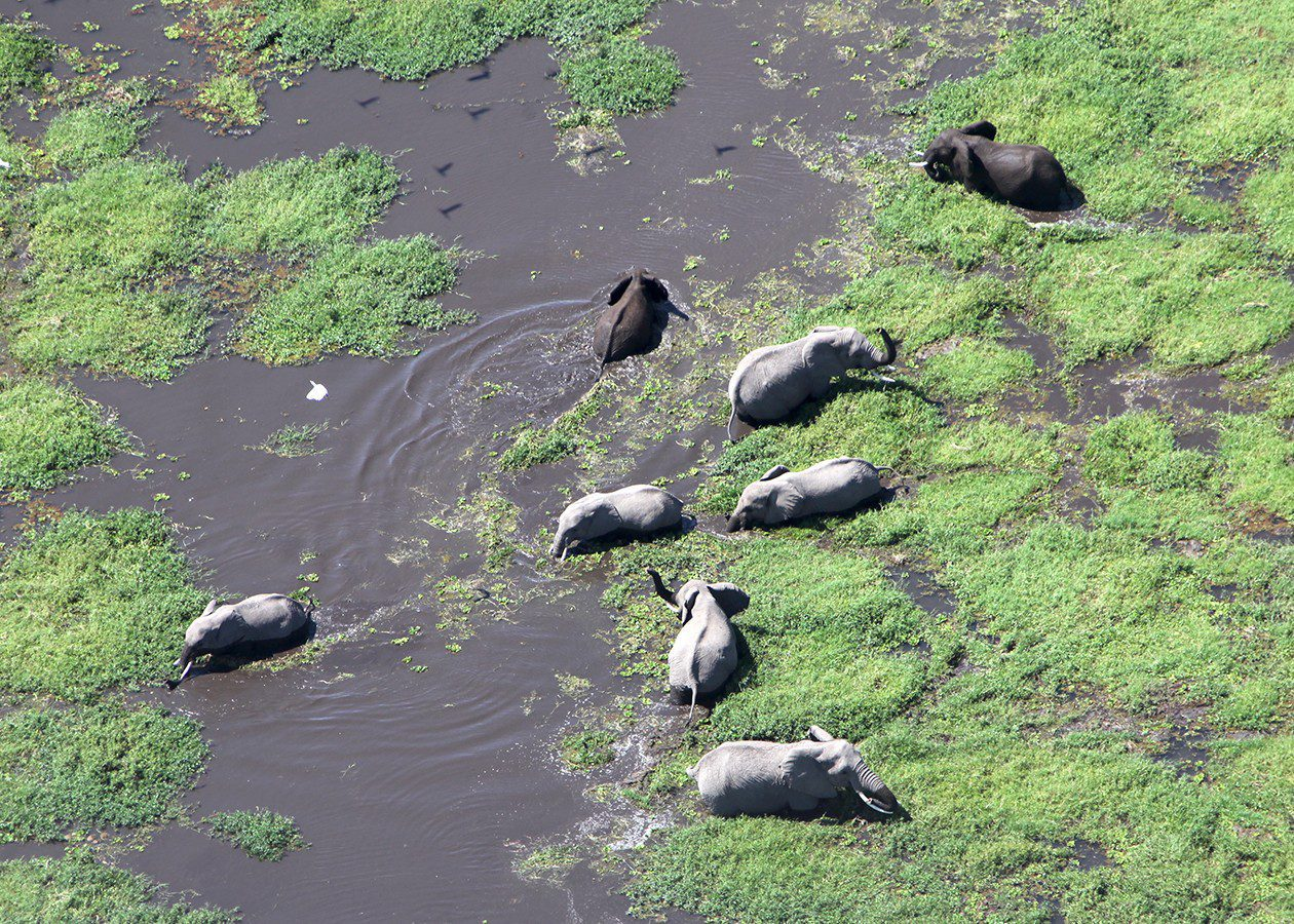 aerial photo of elephants in a swamp in Amboseli