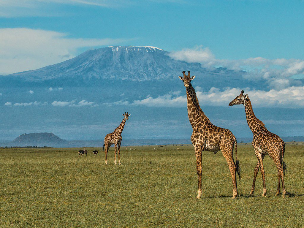 on this Kilimanjaro climb you'll see views of mt. kilimanjaro with low hanging clouds and blue skies above giraffes