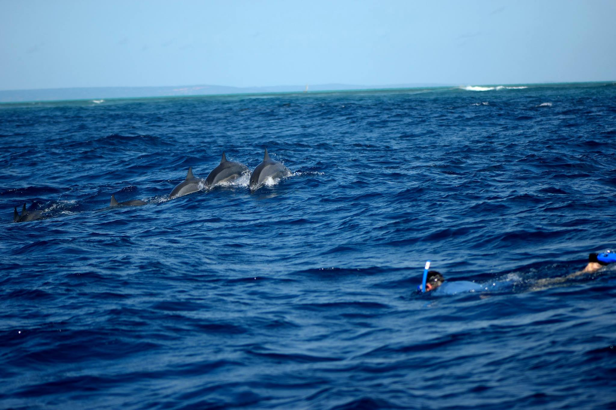 Dophins at Mafia island