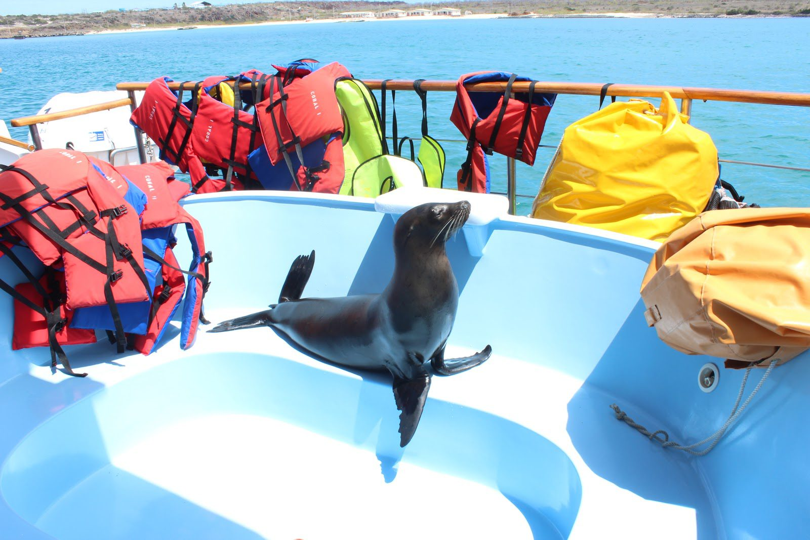 a curious seal sits inside an empty hot tub aboard a Galapagos cruise boat, surrounded by colorful life vests and dry bags.