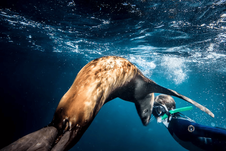 a snorkeler gets nose-to-nose with a sea lion, just below the deep-blue ocean's bubbly surface while on an Africa snorkeling safari