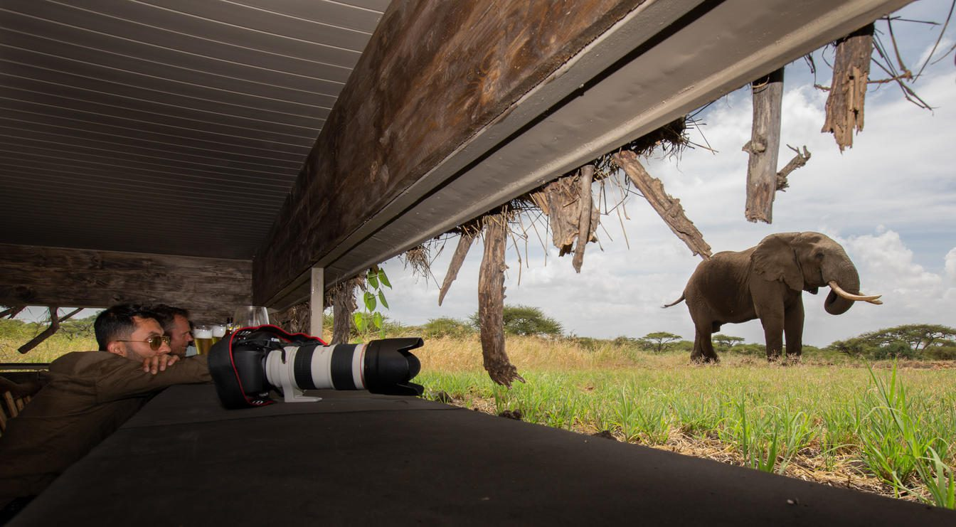 two photographers observe a nearby elephant from the inside of a sunken photographic hide