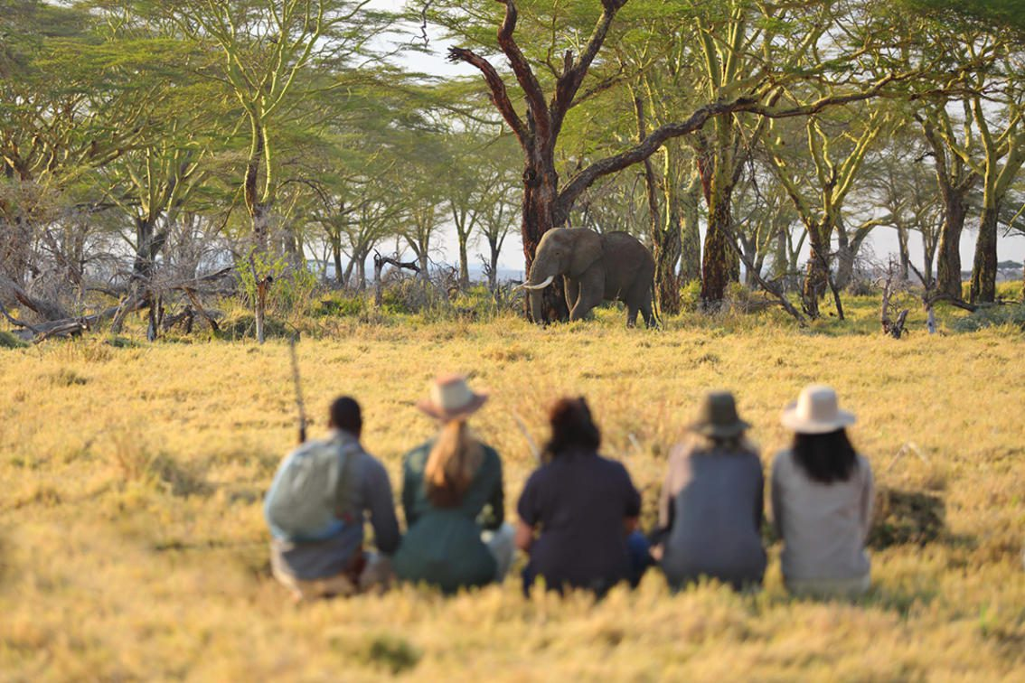 five people crouched down to look at an elephant in the distance on a walking Tanzania big game safari