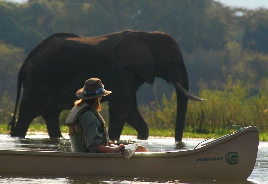 a woman in a canoe pauses with her oar on her lap, watching an elephant wade nearby through the shallow water