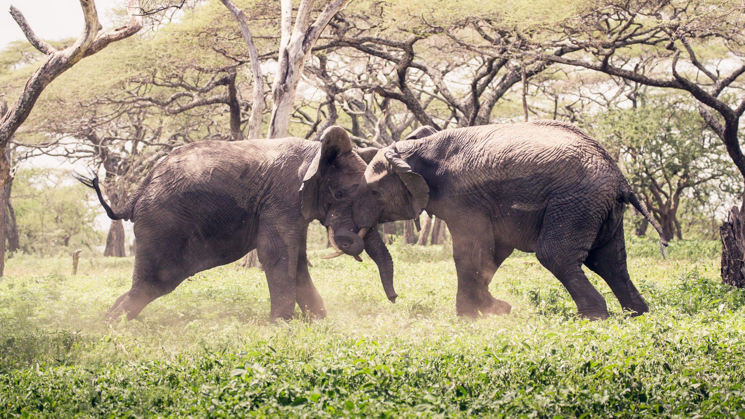 Elephants at Mwiba Lodge