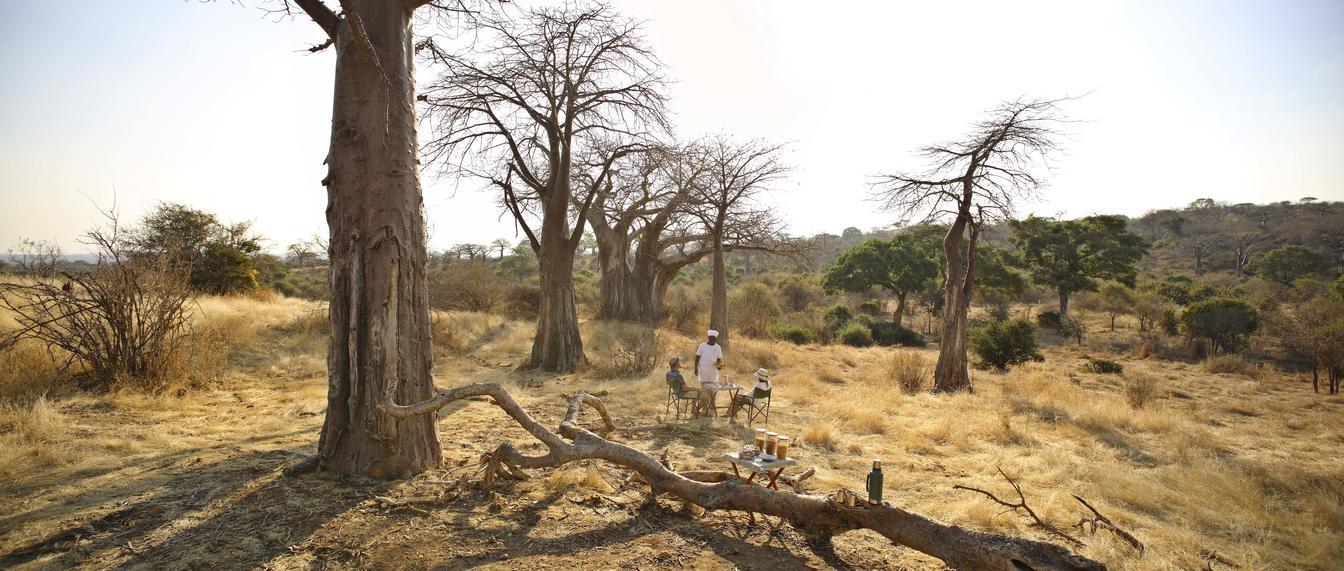 Tanzania safari views of baobab trees in Ruaha
