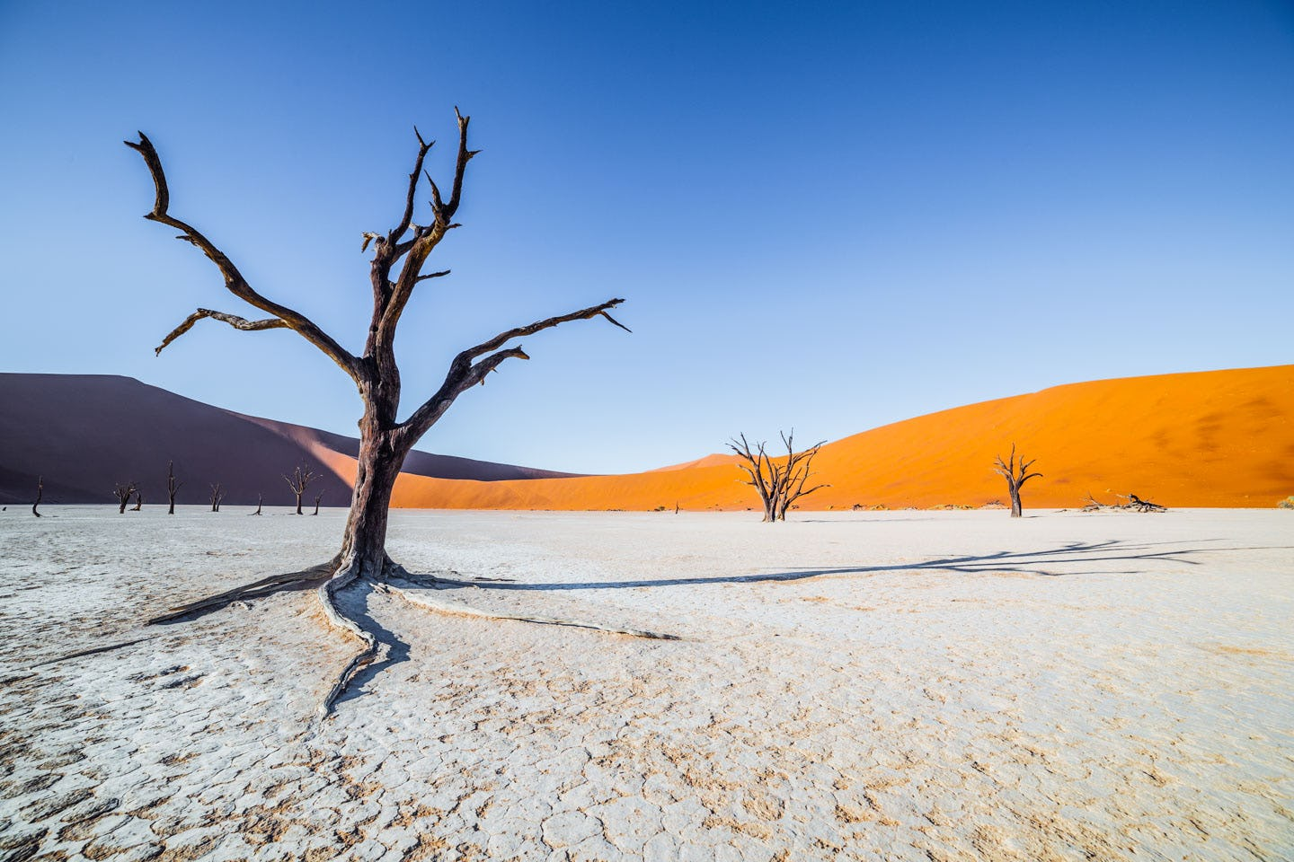 Deadvlei tree with dune in the background