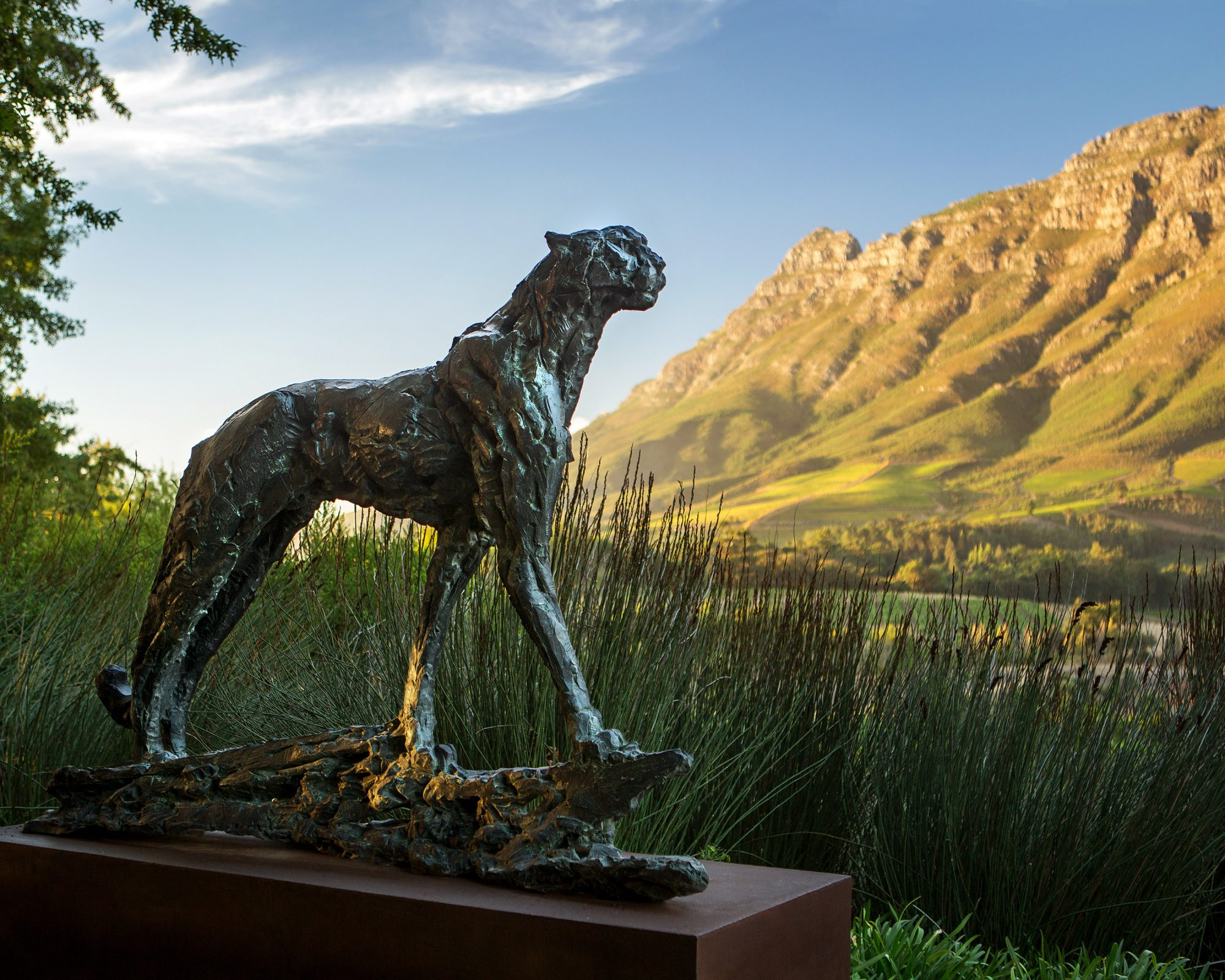 bronze sculpture of a cheetah overlooking the mountains at Delaire Graff