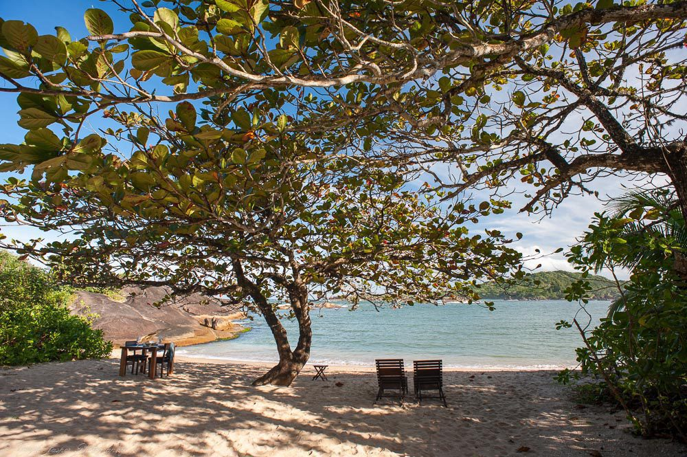 two chairs under a tree on a secluded beach