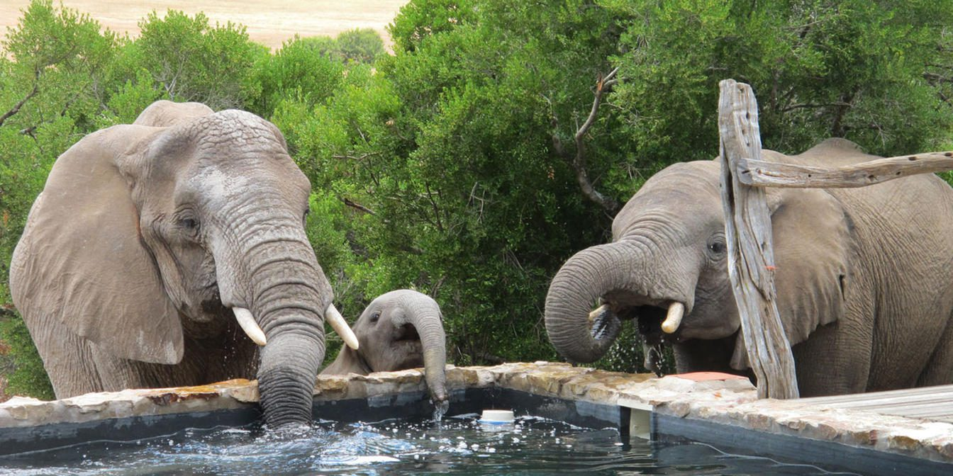 three elephants drinking out of pool with green trees