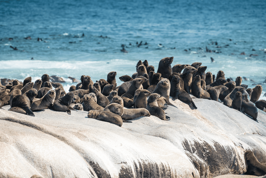 Skeleton Coast Shipwreck Lodge Namibia sea lions on this Southern Africa conservation safari