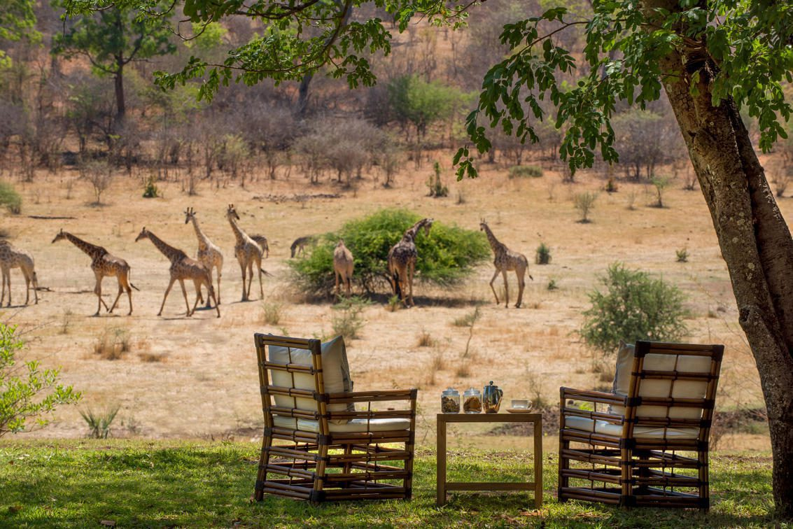 two chairs looking out to several giraffes on this luxury Southern Africa safari
