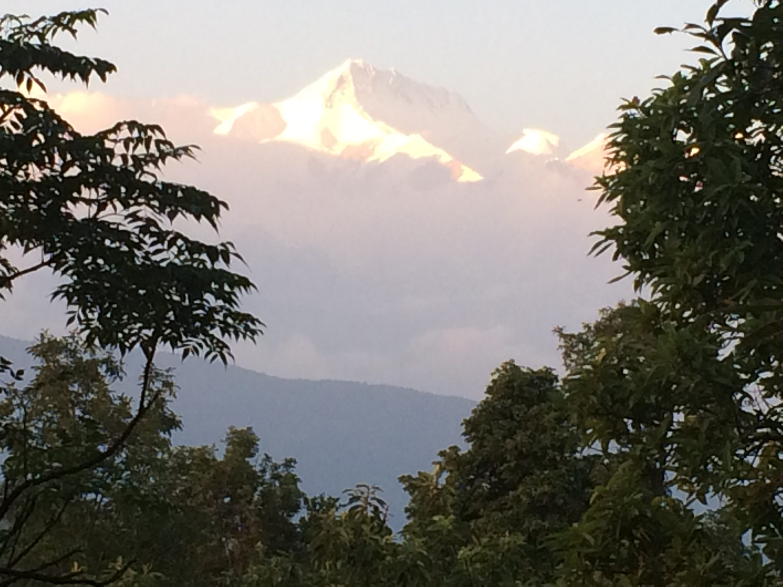 Fishtail peak at sunrise, seen between trees on Nepal holiday